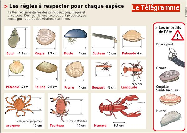 Reglementation-France-peche-coquillages-tailles-et-especes